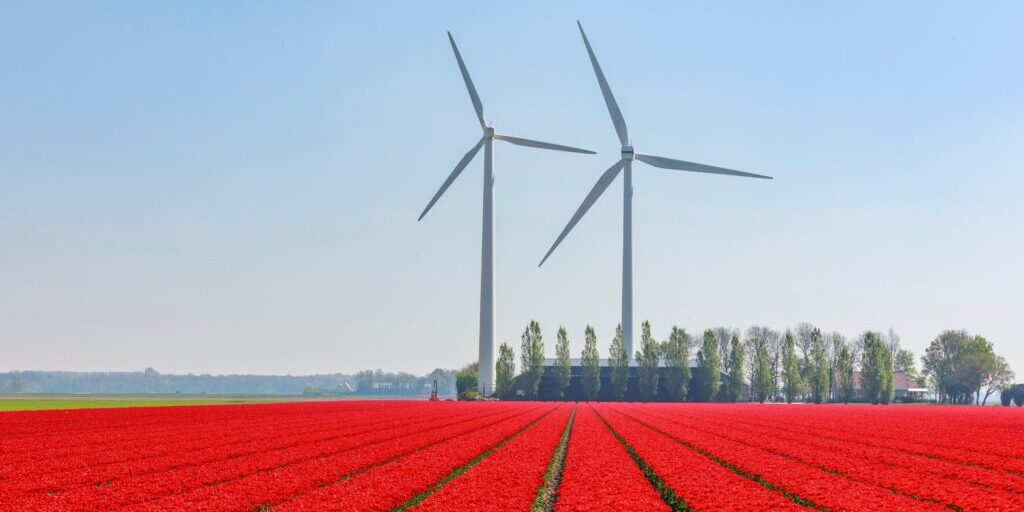 Investing in Renewables Turbines and tulips