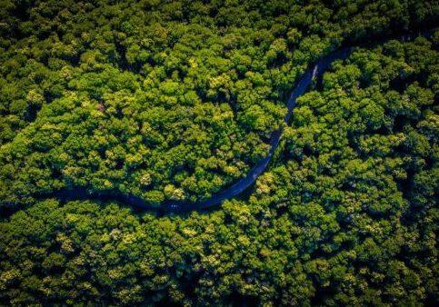 green sustainable future image