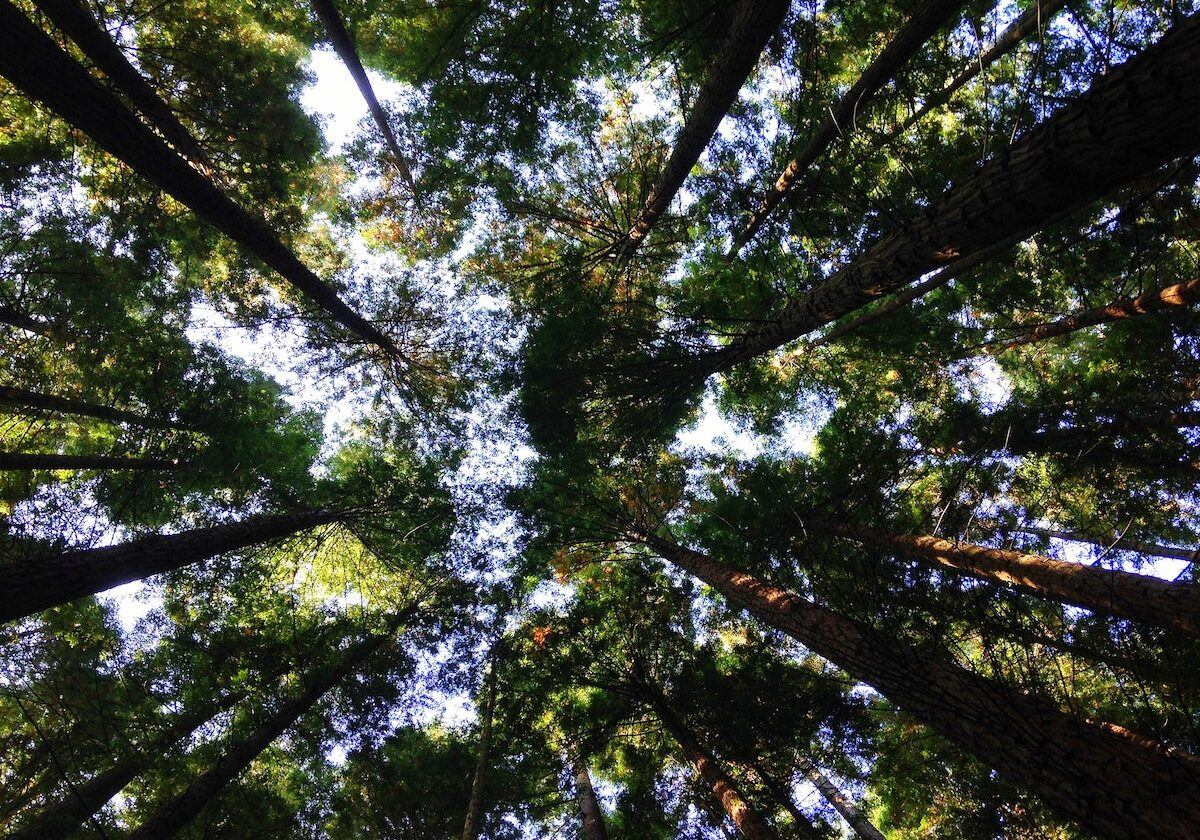 trees offsetting emissions